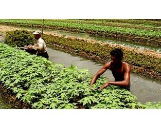 Video: Floating farms in Bangladesh help farmers survive floods - Al Jazeera