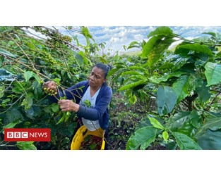 No pickers, no coffee: How Covid threatens Colombia's harvest - BBC