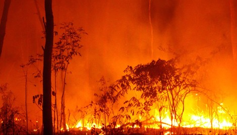 Insurance claims soar as New South Wales burns