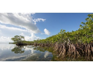 Restoring mangroves to build coastal resilience