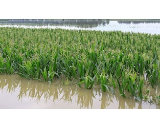 Egypt: First crop insurance policy to be issued
