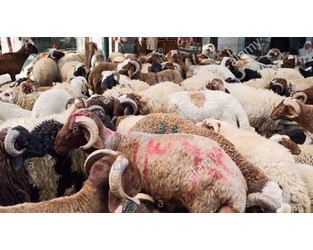 Egypt: Call to amend rules for livestock insurance fund