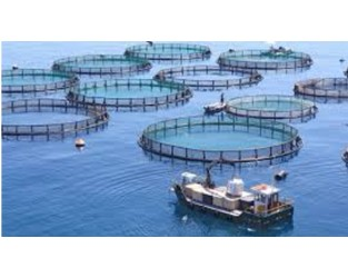 Morocco: Call for insurance for aquaculture sector