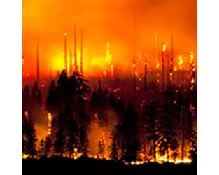 The Burning Issue: Managing Wildfire Risk