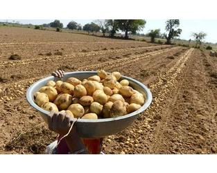 Potato farmers cry foul as PepsiCo sues them - The Hindu