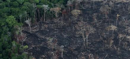 Brazil Amazon deforestation soars to 11-year high under Bolsonaro - Reuters