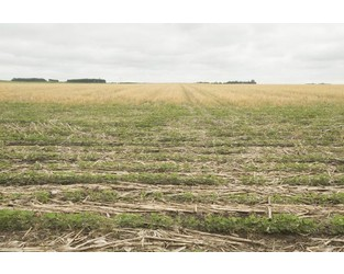 Crop insurance discount deadline extended to January 27 for Iowa farmers - Agriculture.com