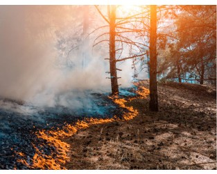 Artificial Intelligence Helps to Contain Wildfires, Predict Wild Weather
