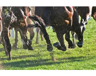 Liberty enters equine and livestock markets, hires Bowen-Rees to lead