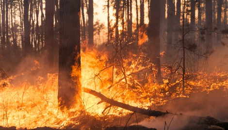 California Largest Utilities Will Spend Billions to Lower Wildfire Risk