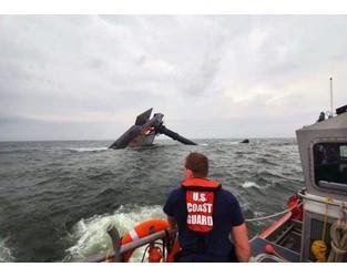 No response as divers knock on capsized ship hull - AP
