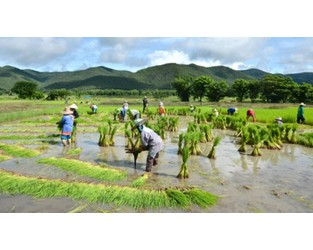 Thailand: Crop insurance premiums likely to increase next year