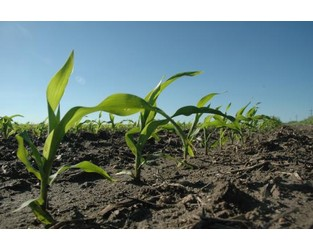 U.S. Corn Production, Supplies Fall, USDA Says - Agriculture.com