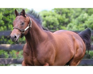 Bloodstock business breeds high stakes for stallion fertility