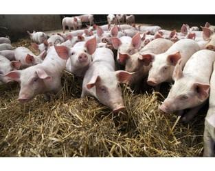Addressing the Challenges in Assessing Livestock Insurance Risks