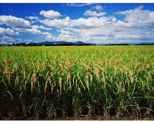 Tariffs, Congressional Negotiations Pressure on U.S. Subsidized Multiperil Crop Insurance: A.M. Best