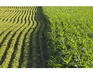 Corn, soybean ratings drop, USDA says - Agriculture.com