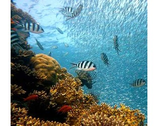 Nature Conservancy targets Florida & Hawaii for parametric reef insurance