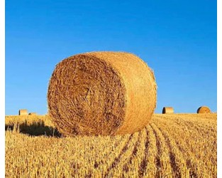 Let's talk – environmental risks for the food, beverage and agriculture sector