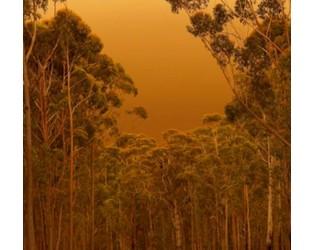 Australia Bushfires: A New Normal?