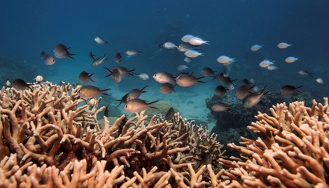 Can Marine Insurance Save Coral Reefs? - gCaptain