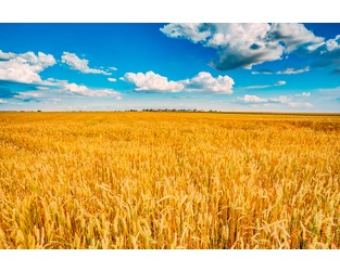 Crop Insurance Market Consolidation Shows No Sign of Stopping: Conning