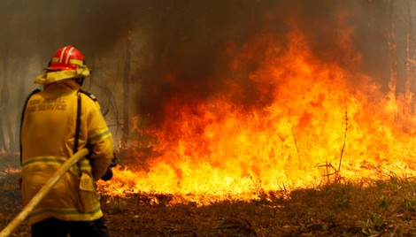 Frequent Wildfires Decimating Forests Becomes Concern Worldwide