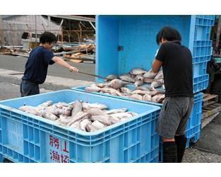 Lobster, abalone among seafood destroyed in Chiba blackou - The Asahi Shimbun