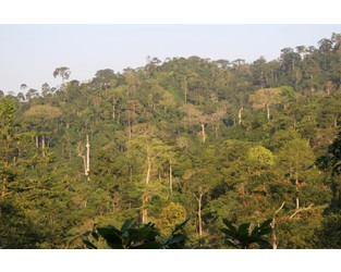 Ghanaian activists sue government to save forest from mine - Mining.com