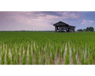 Indonesia: Farm insurance scheme grows with more land covered