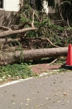 Typhoon Faxai: Strongest Typhoon to Impact Greater Tokyo in Fifteen Years