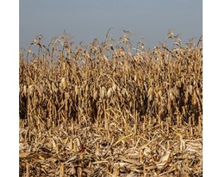 Underinsured drought risk expected to rise with climate change