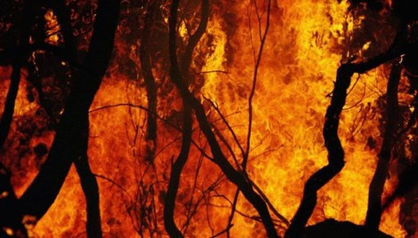 Australia's Bushfires Could Surpass 2009's Costly Season; Analysts, Insurers Comment