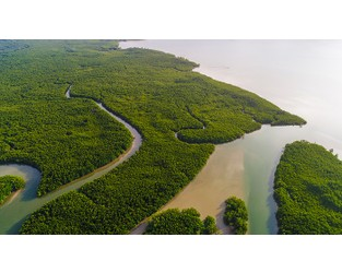Mangrove insurance scheme would tackle flooding risk in Caribbean, says new research