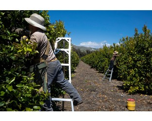 Coronavirus Spreading Among U.S. Fruit, Vegetable Packers Raising Concern