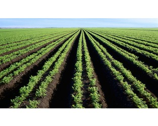Sustainable policies needed to boost Africa's agribusiness