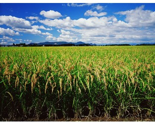 Crop Insurance Planting Deadlines Stressed by Massive U.S. Farmland Flooding - Carrier Management