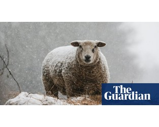 Half of UK farms could fail after no-deal Brexit, report warns - The Guardian
