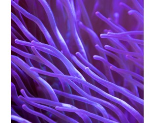 Willis Towers Watson collaborates on world-first insurance protection for endangered Mesoamerican Coral Reef