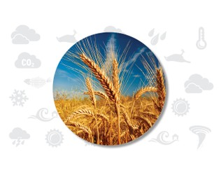 Adapting to Climate Change: Agriculture