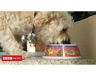 US pet food recalled after 70 dogs die and others fall sick - BBC