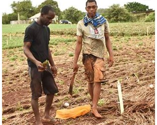 $647m in preliminary aid for farmers as damage bill climbs - Jamaica Observer